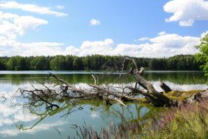 Rybník Starý Kanclíř